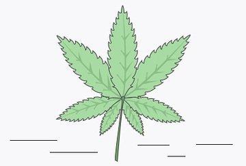 Tenants Smoking Marijuana in Rentals